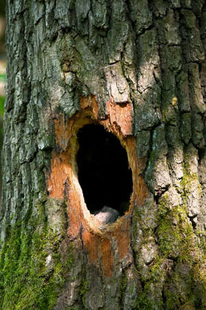 burrow: Animals hole on a tree trunk