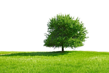 environmental conversation: Green tree and meadow, white background