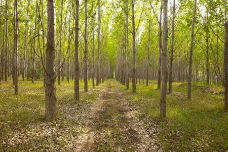 dirtroad: Fresh green forest with dirtroad Stock Photo