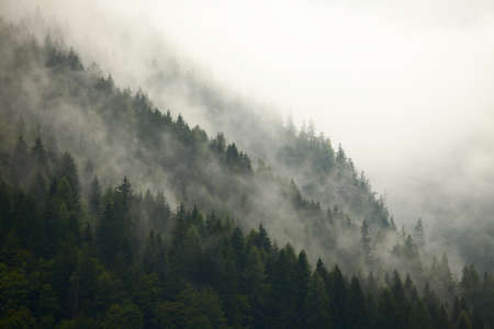 Fog in the mountain forests photo