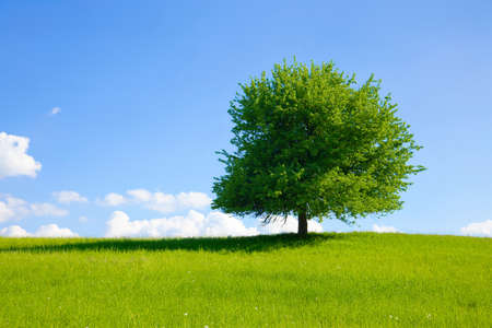 environmental conversation: Green tree on a meadow with blue sky