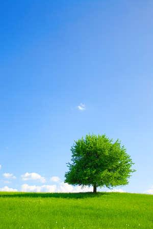 environmental conversation: Tree on a green meadow