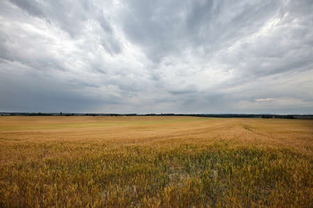 approaching: Agricultural field in cloudy, overcast weather