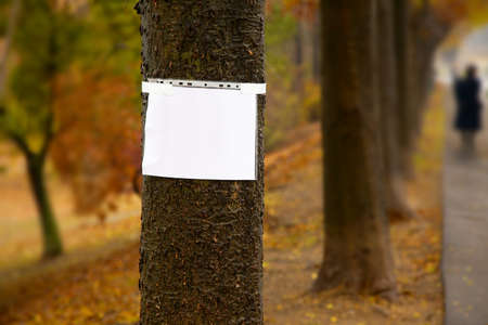 Blank sign on a tree in a park Stock Photo - 20068445