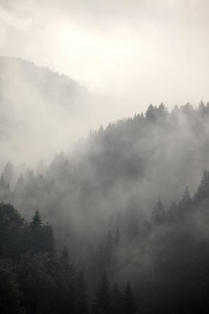 Mist die de bergbossen Stockfoto