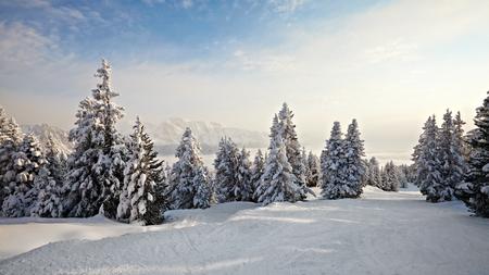 Rboles de pino cubierto de nieve en un paisaje de invierno Foto de archivo - 32484078