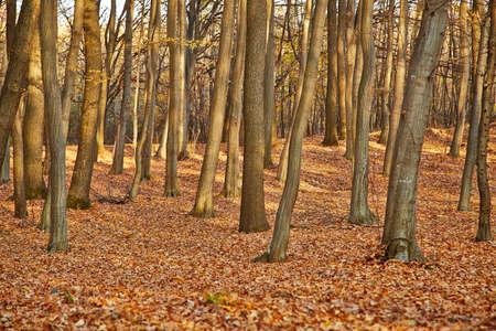 Herbst Wald mit kahlen Bäumen