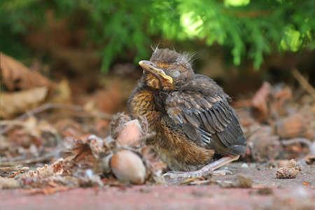地面に座って若い赤ちゃんの鳥