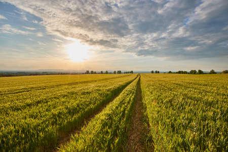 Landbouwgebied in zomerzonlicht