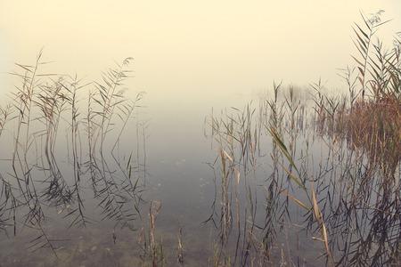 Fog on the lakeside