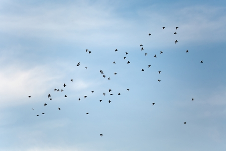Flock of birds flying in the sky Stock Photo