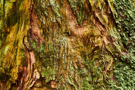 Tree Trunk Closeup 免版税图像