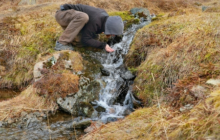 Drinking from a stream in Iceland Stok Fotoğraf