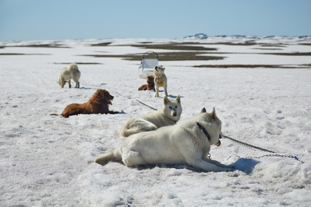Dog sledge having a stop Stock Photo