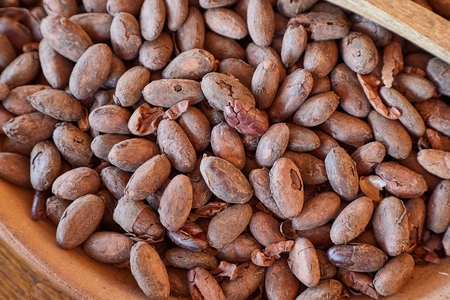 Cocoa beans picked by hand