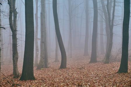 Autumn forest mist