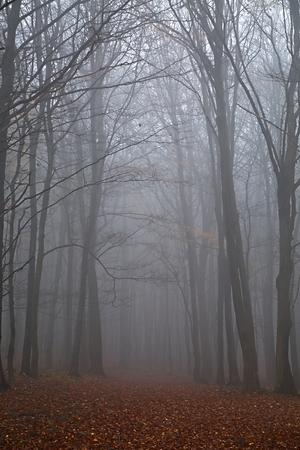 Herbstwaldnebel Standard-Bild