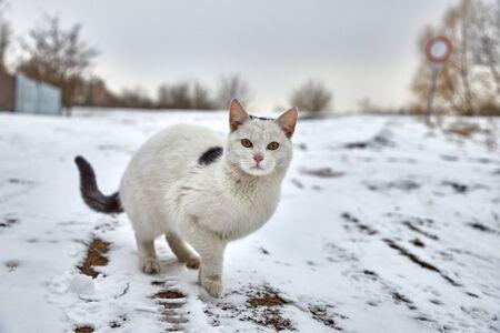 Cat in winter snow
