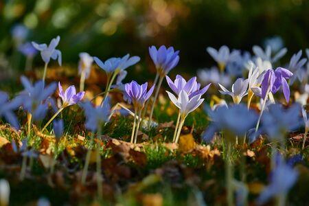 Flowers in breeze Standard-Bild