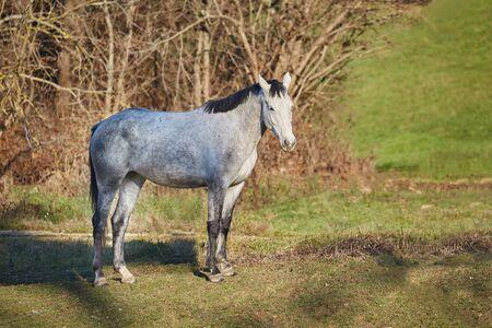 Horse on a farm field Stockfoto