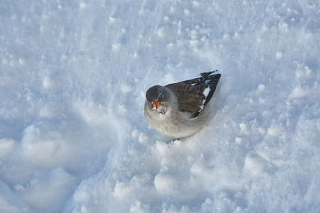Bird searching for food in winter
