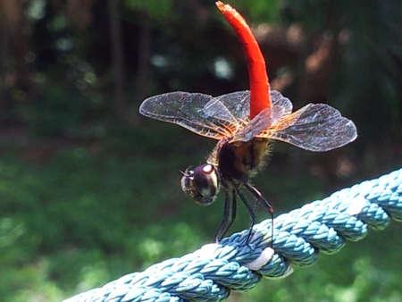sunbath: Dragonfly nemen een zonnebad