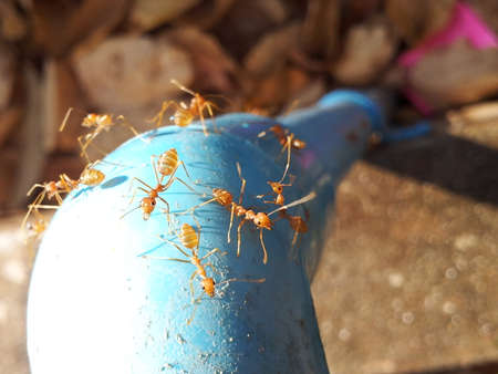 societal: Ants search for water
