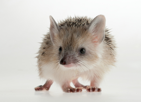 funny picture: Hedgehog closeup. Forest animals. Funny picture. Stock Photo