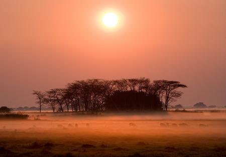 Kafue 국립 공원에서 일출입니다. 멋진 핑크 안개. 아프리카. 잠비아.