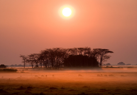 Sunrise in the Kafue National Park. The stunning pink mist. Africa. Zambia.