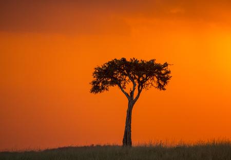 Sunset in the Maasai Mara National Park. Africa. Kenya.