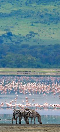 turismo ecologico: Dos cebras en el flamenco fondo. Kenia. Tanzania. Parque Nacional. Serengeti. Masai Mara. Una excelente ilustración. Foto de archivo