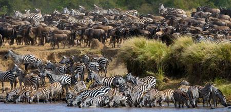 turismo ecologico: Gran manada de cebras de pie en frente del río. Kenia. Tanzania. Parque Nacional. Serengeti. Masai Mara. Una excelente ilustración.