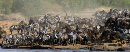 turismo ecologico: Big herd of zebras standing in front of the river. Kenya. Tanzania. National Park. Serengeti. Maasai Mara. An excellent illustration. Foto de archivo