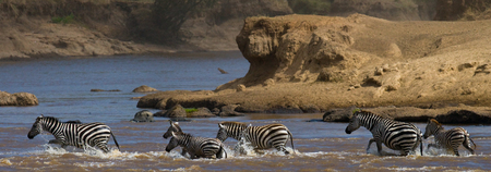 tanzania antelope: Wildebeests are crossing Mara river. Great Migration. Kenya. Tanzania. Stock Photo