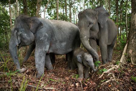 함께 서있는 세 아시아 코끼리. 인도네시아 공화국. 수마트라. 웨이 Kambas 국립 공원. 훌륭한 그림.