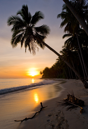The beach on the tropical island. Dawn. Indonesia. Indian Ocean. An excellent illustration.