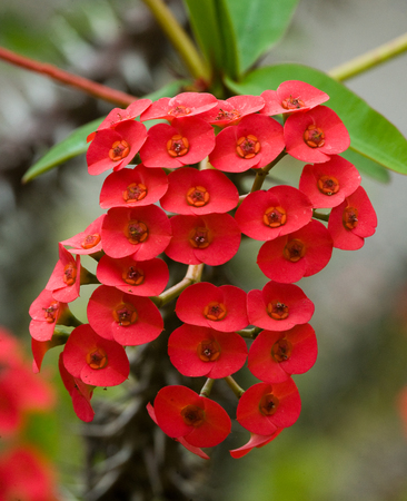Beautiful tropical red flower. Madagascar. An excellent illustration. Stock Photo