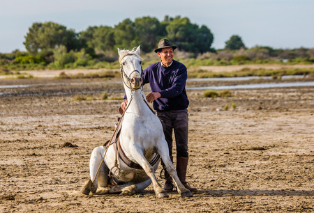 camargue: PROVENCE, FRANCE - 09 MAY, 2015: Riders near his White Camargue horse. Parc Regional de Camargue - Provence, France Editorial