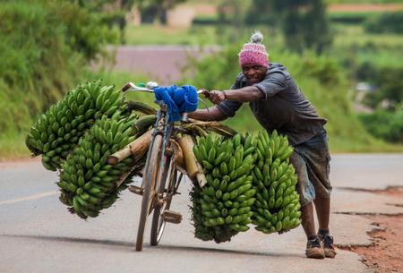 KISORO, 우간다, 아프리카 -2010 년 5 월 10 일 : Kisoro. 우간다. 아프리카. 젊은이는 길가에서 자전거를 타고 행운을 바라며 바나나를 시장에 팔려고합니다.