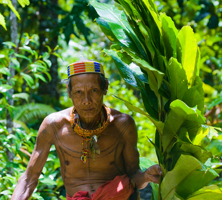MENTAWAI PEOPLE, WEST SUMATRA, SIBERUT ISLAND, INDONESIA - 16 NOVEMBER 2010: Man Mentawai tribe in the jungle collecting plants.