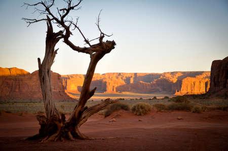 Albero morto nella Monument Valley