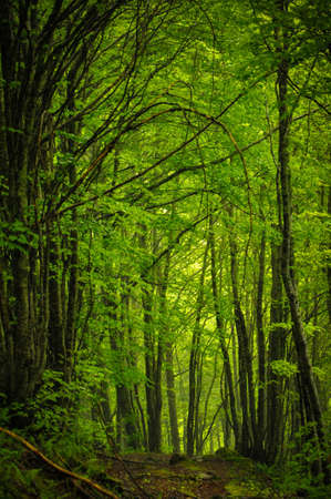 Tunnel of Greenery un Undergrowth of the Valley of Estours Stock Photo