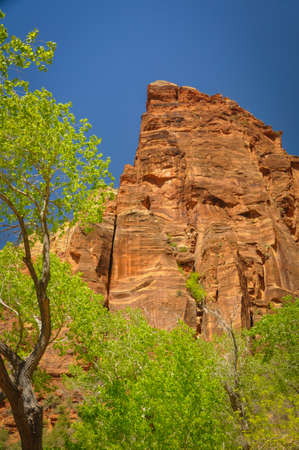 Cliff above the Trees in Zion National Park