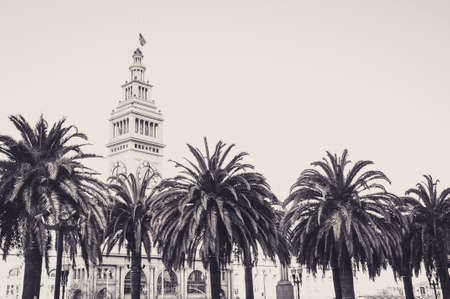Palm Trees at the Embarcadero, in San Francisco