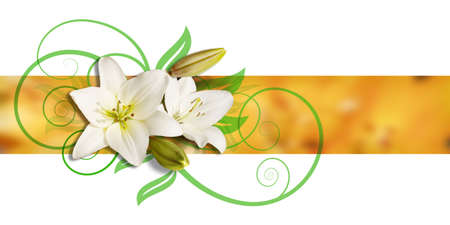 White lilies on a yellow ochre ribbon, two of them blooming, two closed