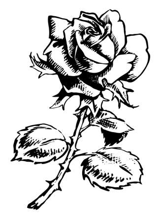 passion flowers: Illustration of a rose in black and white