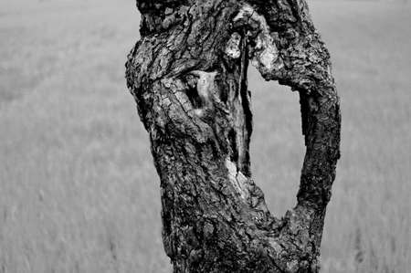 ruggedness: Part of a trunk of an old tree in black and white Stock Photo
