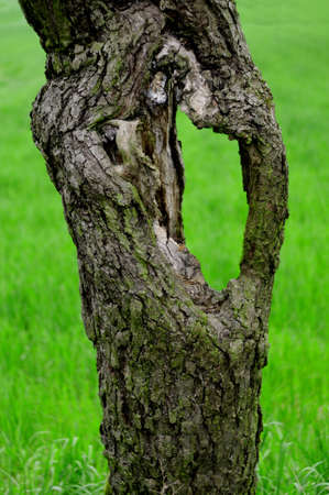 ruggedness: Part of a trunk of an old tree