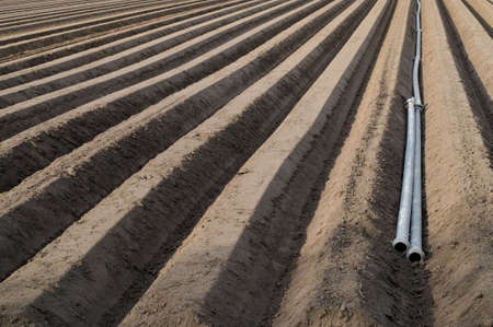 Asparagus field with irrigation pipes in springtime photo